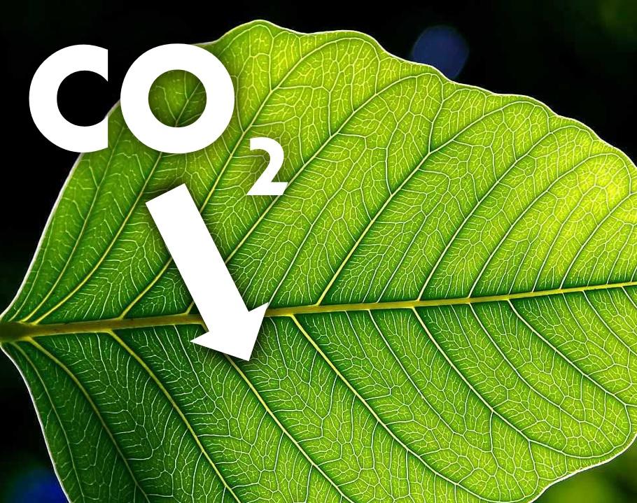 Una foglia che assorbe anidride carbonica dall'atmosfera.